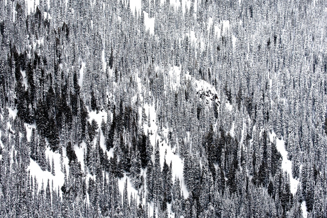 An interesting pattern or snowy trees in coastal British Columbia